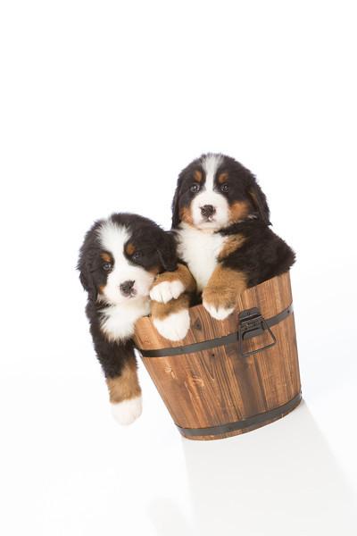 2013-Pearson Pups-Jun02-0433.jpg