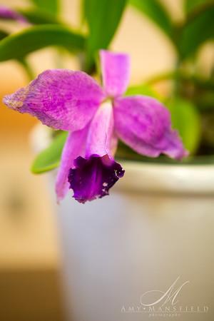2016 10 Orchid Hobbyist-Betty Kelepecz