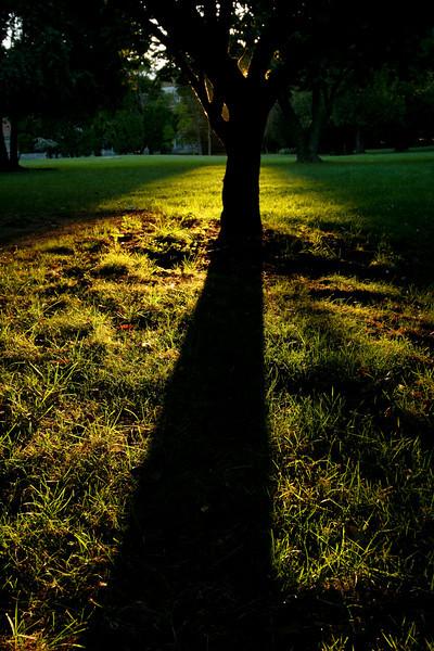 Long Shadows.jpg