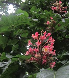 Jugenheim flora