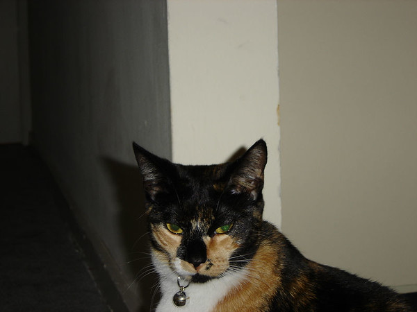 2004 12 26 - Cats