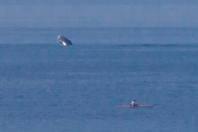 Maui2014 Whales