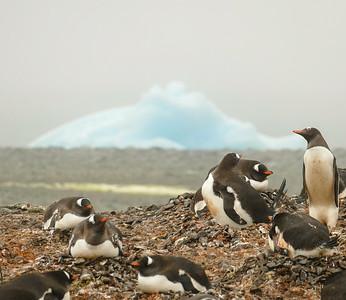 Antarctica: Yankee Harbour