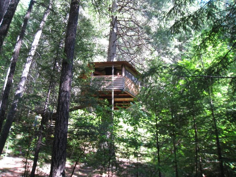 The Lilly Pad Treehouse