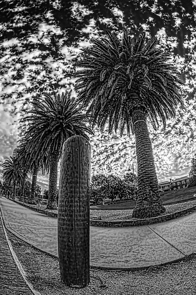 Melbourne Photo Walk - Palms