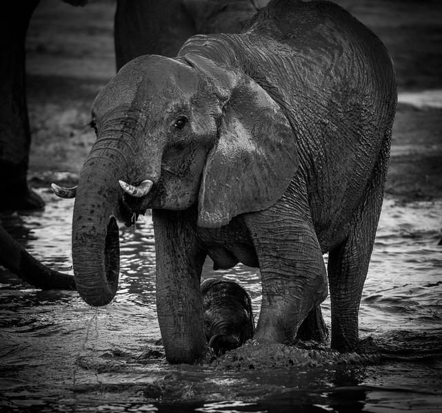Botswana_June_2017 (4335 of 6179).jpg