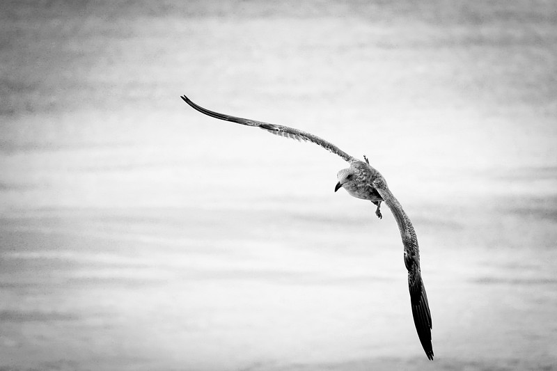 A bird in flight