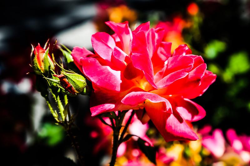 © Gloss Photography Studios-609.jpg