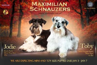 Jodie & Toby Puppies, DOB 1/07/2021