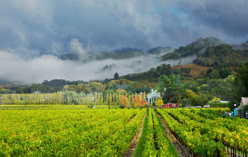Vineyard with morning clouds, California