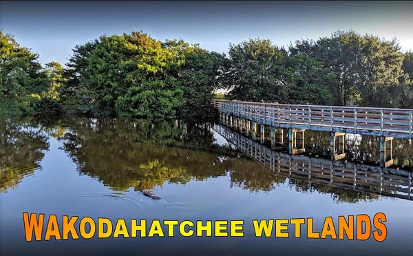 Wakodahatchee Wetlands - Feb 2020