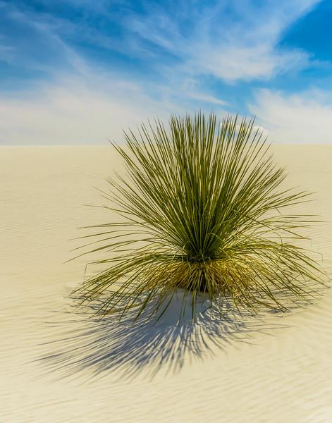 Yucca White Sands.jpg