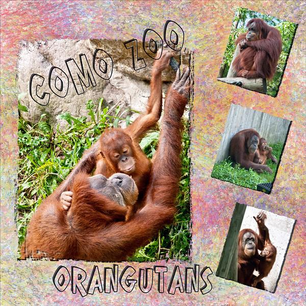 ComoZoo-Orangutans.jpg