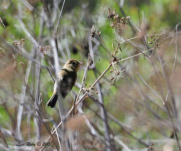 Whelan Lake - 10/12/13 - San Diego Audubon