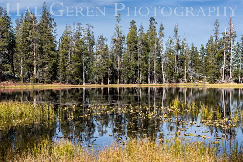 Vernal Pool Tioga Pass,, California 1610S-VP1