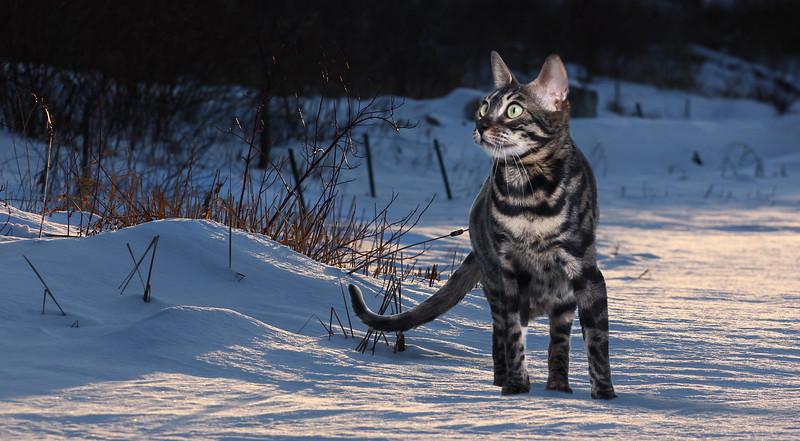 chaton-8.jpg