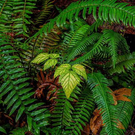 Browns Creek-Rhododendron Loop