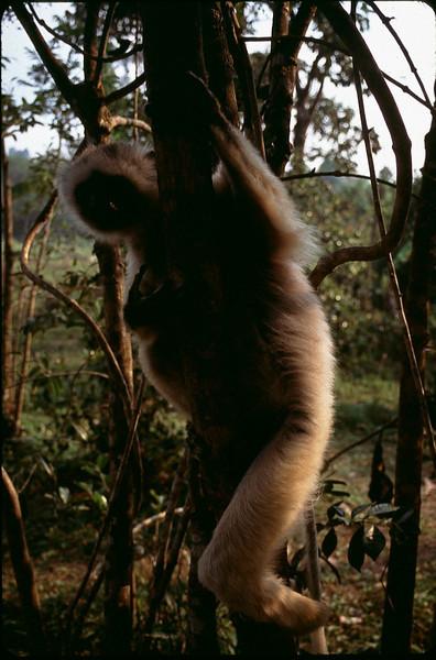 Madagasgar1_022.jpg