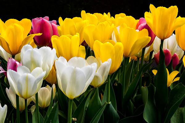 Orono Spring Flowers 2016