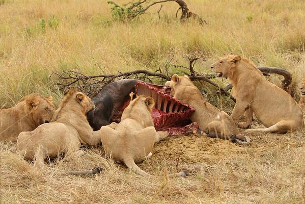 East Africa, Serengeti and Zanzibar - Klein's Camp - Day 3