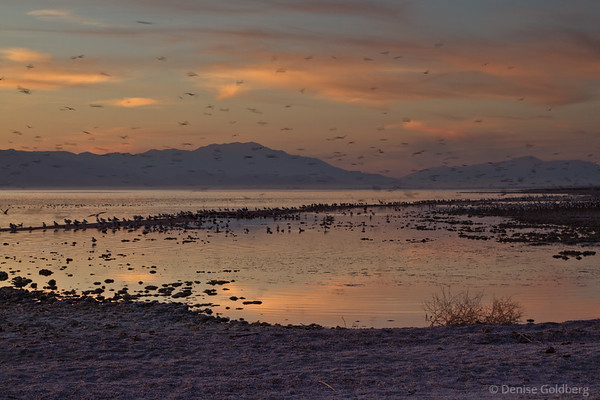 setting sun, birds, Salton Sea