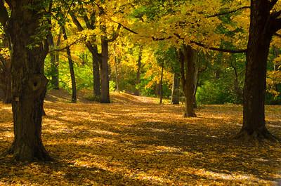 Arnold Arboretum 10-13