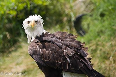 Eagle Heights