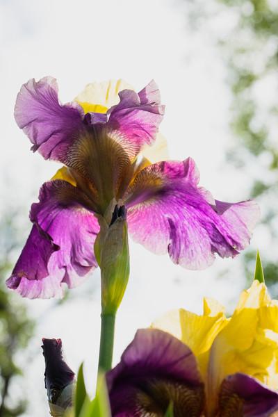 Flowers 5-5 29.jpg