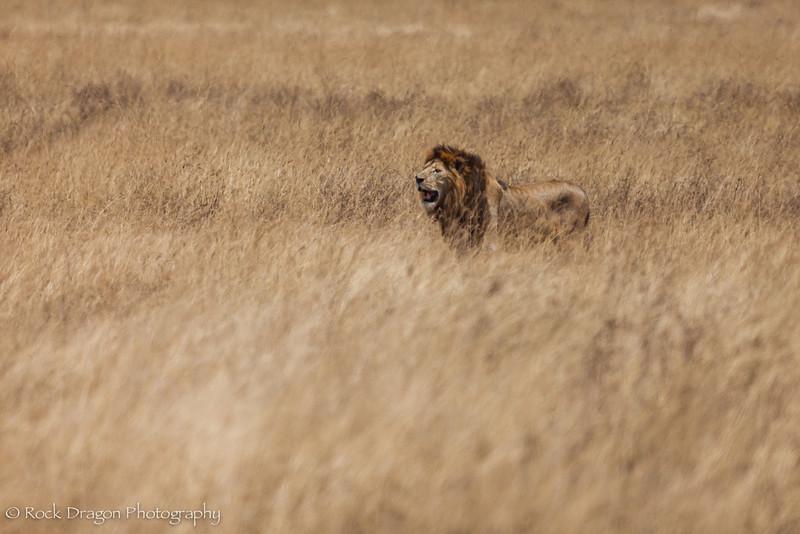 Ngorongoro-67.jpg