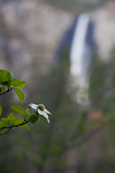 Dogwood and Bridalveil Falls