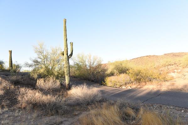 Desert - Cactus 1