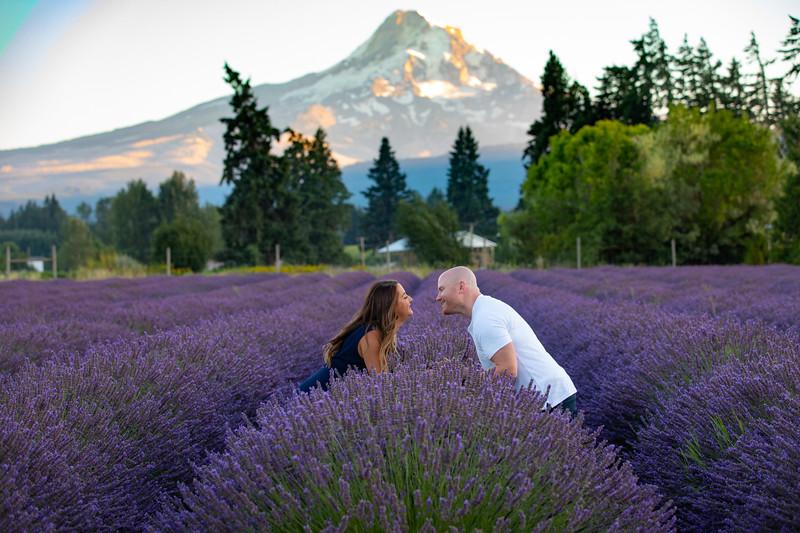 Lavender Valley 2020