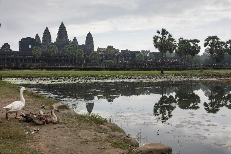 Angkor Wat and Geese