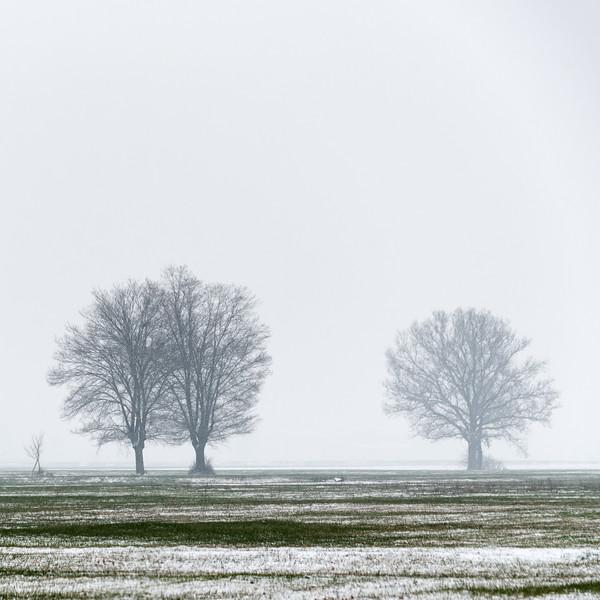 Trees - Reggio Emilia, Italy - March 1, 2018