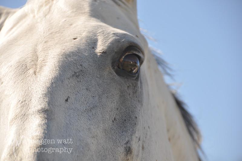EB&Horses-176.jpg
