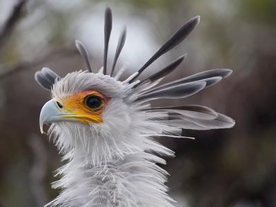 San Diego Zoo Secretary Birds