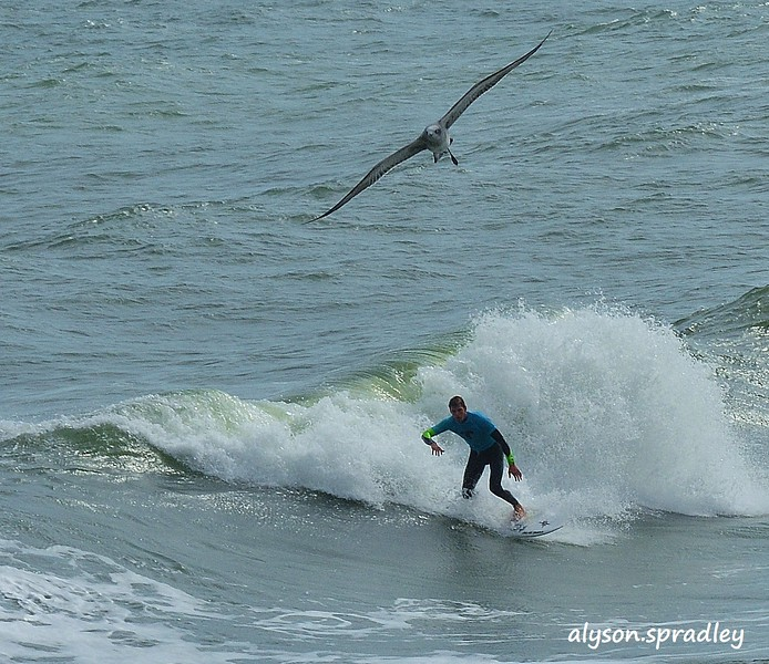 1 Surfer& Bird--no name by Alyson Spradley.JPG
