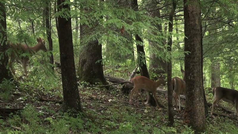 Deer_rain_02.mov