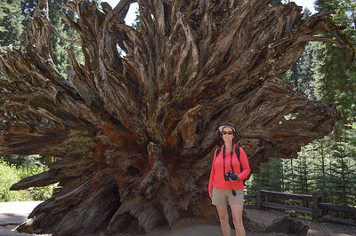 Mariposa Grove/Yosemite Nat'l Park/CA - May, 2014