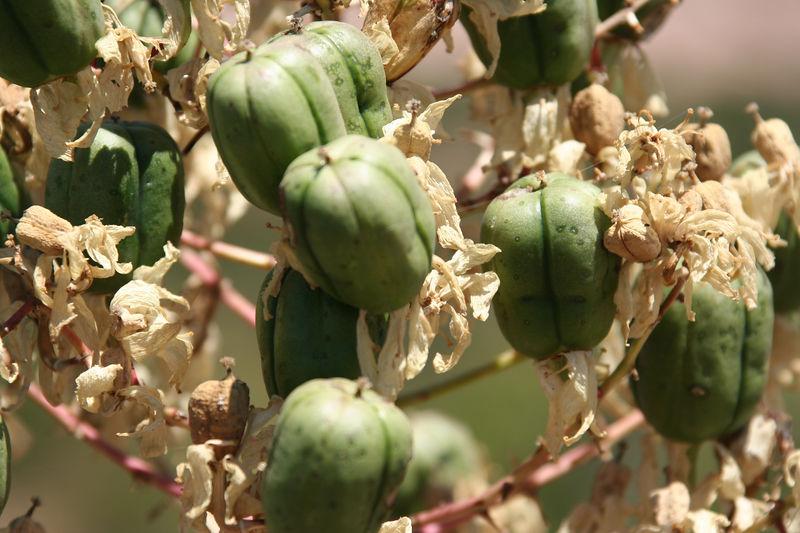 desert plant.jpg