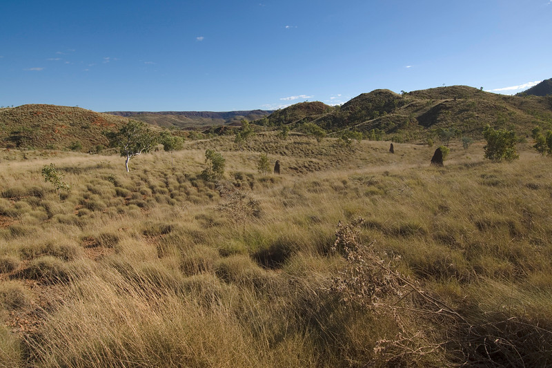 Grass and Hills - Kimberly Region, Western Australia