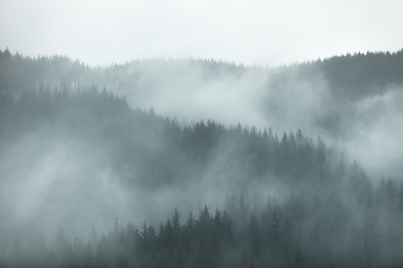 Forest Landscape Photography Oregon layers clouds mist.jpg