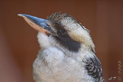 World Bird Sanctuary 2008