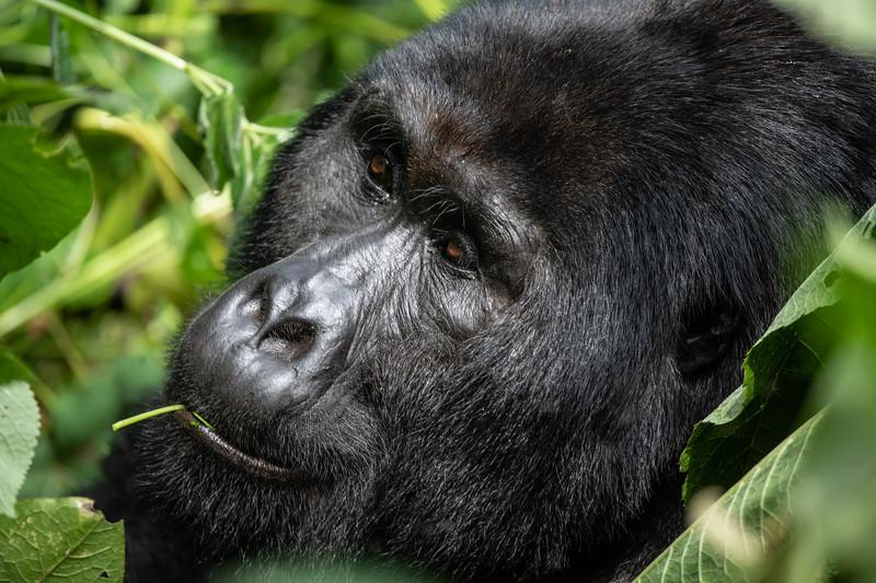 Uganda_T_Gor-2291.jpg