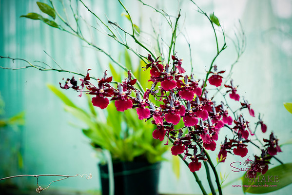 Beautiful greenhouse orchids. © 2013 Sugar + Shake