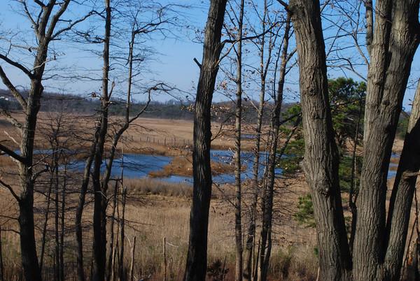 Cheesequake State Park Hike 120609