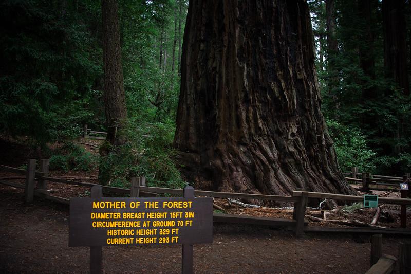 Redwood-41.jpg