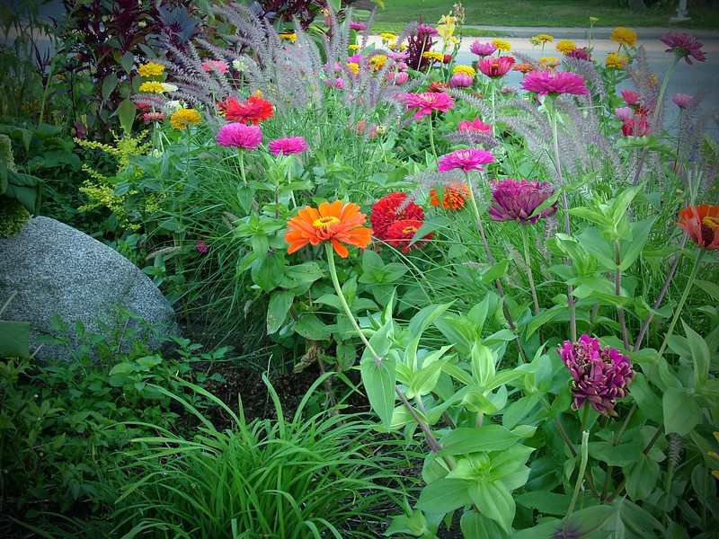 Flowers 086.jpg