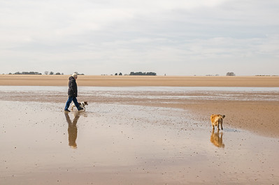 THE DOGS AT SALTFLEET (7)