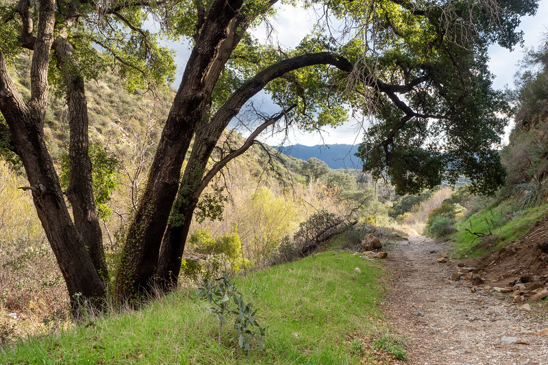 Angeles National Forest, Haines Canyon trail